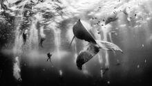 Fotones de naturaleza: El mexicano Anuar Patjane y las ballenas del Pacífico