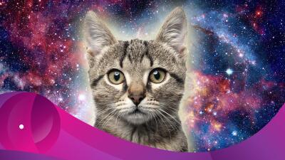 Nuestros guardianes espirituales: los gatos