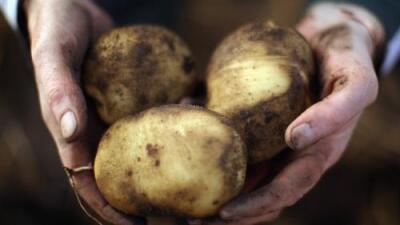 Menos cultivos están alimentando a más personas en todo el mundo (y eso no es bueno)