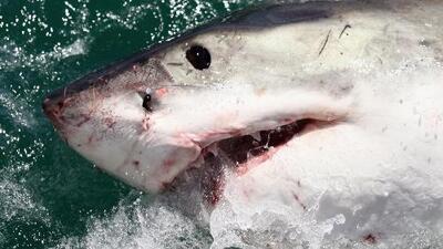 Un ataque mortal de tiburones en las Bahamas prende las alarmas en el sur de Florida