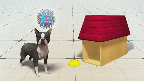 La gripe canina continúa propagándose en EEUU