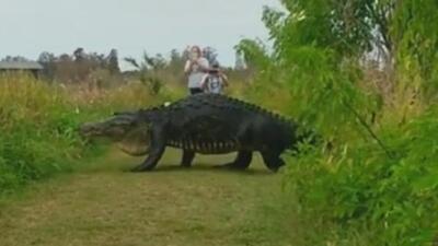 ¿Se le puede hacer una foto así de cerca a un cocodrilo gigante (y no morir en el intento)?