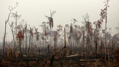 📸 Destrucción en el Amazonas: las dramáticas imágenes tras el paso de las llamas que están arrasando el pulmón del mundo