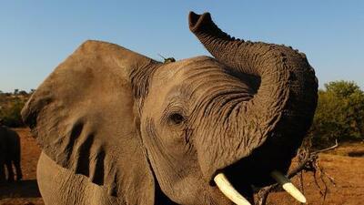 Asesinan a tiros a renombrado activista contra la cacería de elefantes