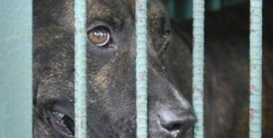 Entra en vigor la prohibición de la venta de perros y gatos que vienen de criadores en San Antonio