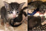 Insólito: Contratista encuentra 15 gatos en el interior de una pared