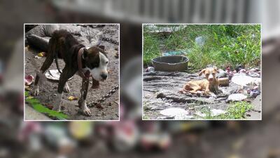 Una mujer pasará seis meses tras la rejas por crueldad animal en Houston