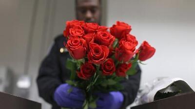 Más de 1,300 millones de tallos de flores han sido revisados en el aeropuerto de Miami para el Día de San Valentín