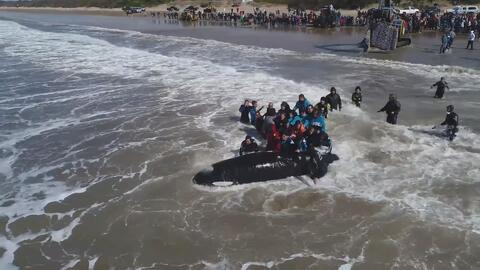 Un difícil rescate: 20 horas para devolver esta orca al mar