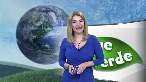 'Vive verde 2018', el proyecto educativo que incentiva el cuidado del medio ambiente