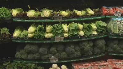 Aseguran que mantener una dieta vegetariana aumenta el riesgo de sufrir una trombosis