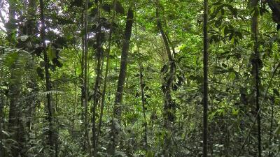 El valor de los bosques jóvenes de América Latina
