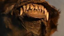 Esta mascota de 14,000 años tenía en su estómago un trozo de uno de los últimos rinocerontes lanudos del planeta