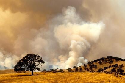 """Alrededor de 20 conflagraciones que arden en los condados de Santa Clara, Alameda y Contra Costa, entre ellas <a href=""""https://www.univision.com/local/san-francisco-kdtv/incendios-causados-por-las-tormentas-electricas-provocan-evacuaciones-en-varios-condados-del-area-de-la-bahia"""" target=""""_blank"""">los incendios Marsh y el Deer Zone</a>, fueron consolidados por la agencia Cal Fire y bajo el nombre de <a href=""""https://www.fire.ca.gov/incidents/2020/8/18/scu-lightning-complex/"""" target=""""_blank"""">SCU Lightning Complex han calcinado 25,000 acres</a> de terreno."""