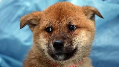 Perros rescatados de Oklahoma llegan a Illinois para ser adoptados