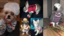 Así se vive el día nacional para vestir a las mascotas en Houston