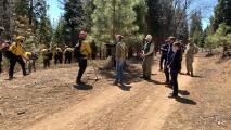 Newsom anuncia presupuesto millonario para ayudar al combate de incendios