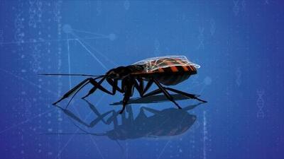 El insecto que propaga el mal de Chagas sigue expandiéndose: confirman su presencia en otro estado