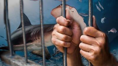 shark prison draft