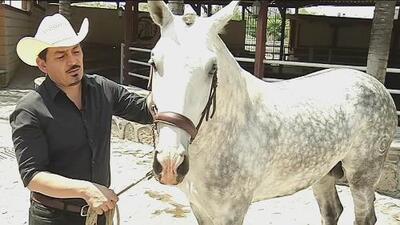 José Manuel Figueroa presume su pasión por los caballos (lo heredó de Joan Sebastian)