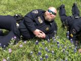"""""""¡Es la época del año!"""": Policías texanos posan junto a las flores bluebonnets"""