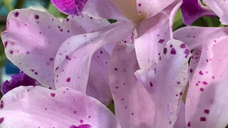 Doce flores para ti, mamá   Fotos   Univision 65 Philadelphia WUVP   Univision
