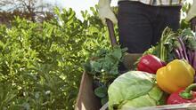 ¿Está creando gentrificación rural el movimiento gourmet?