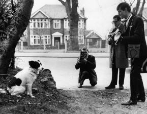 Historia de Mundiales: el perro que se convirtió en celebridad y héroe mundialista en 1966