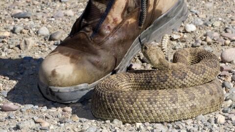Aumentan mordeduras de serpientes en Georgia y así puedes evitar una tragedia