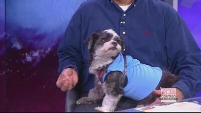 Medidas para mantener seguras a las mascotas en caso de huracán