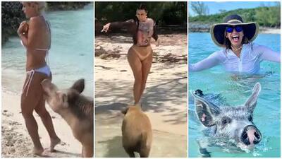 Kim Kardashian se asustó con los cerdos que mordieron a Michelle Lewin (los mismos con los que La Flaca nadó feliz)