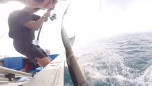Con un violento coletazo: así sorprendió este tiburón a un pescador que intentaba atraparlo