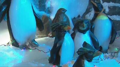 'Ice Land: Pole to Pole', una fría experiencia que nos enseña todo sobre los polos