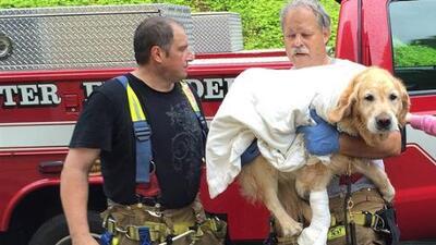 Figo, el perro héroe que saltó frente a un autobús para proteger a su dueña ciega en NY