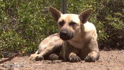 Policía busca a hombre que mató una perra en Juana Díaz