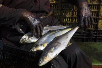 Ganarse la vida en aguas contaminadas: la pesca en el derrame petrolero del lago de Maracaibo (fotos)