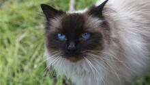 Confirman caso de gato contagiado con rabia en Fresno