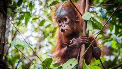 Un estudio afirma que los humanos podríamos causar la extinción de al menos un millón de especies del planeta