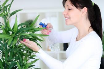 Plantas que atraen energía positiva a tu vida