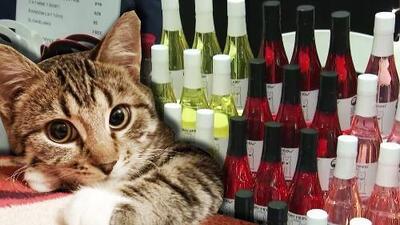 ¿Sabías que existe un vino para gatos? Esto y más fue lo que descubrimos desde el 'Cat Camp' en Nueva York