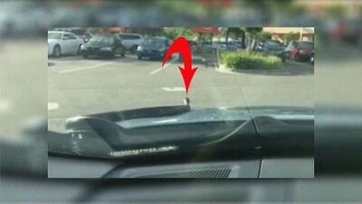 Hombre de Florida pasa tremendo susto cuando serpiente de 6 pies sale del capó de su auto