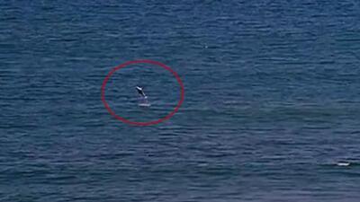 Tiburón interrumpe una competencia de surf en California: imágenes del momento que se detecta su presencia