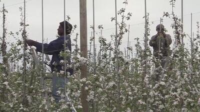 Tras décadas de lucha, los trabajadores agrícolas de Nueva York tendrán el derecho a sindicalizarse