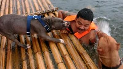 Estos perros vieron a su dueño tirarse al agua y salieron a su rescate pensando que se ahogaba