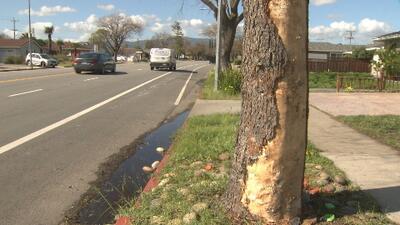 Hombre muere tras estrellarse contra un árbol en el sur de la Bahía