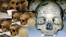 Penn Museum anuncia la repatriación de Morton Cranial Collection