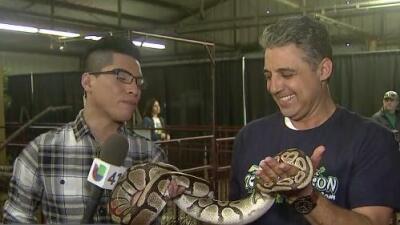 Visita el zoológico en el rodeo de San Antonio