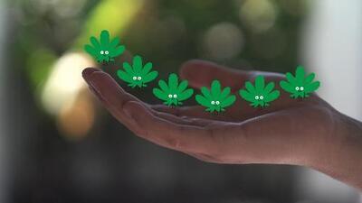 Esto es lo que debes saber sobre la legalización de la marihuana recreacional en California