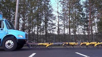 Mira cómo estos robots con forma de perro son capaces de arrastrar un camión