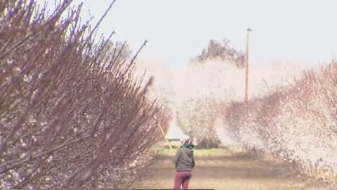 El frío y la lluvia preocupan a los agricultores de Fresno y sus alrededores